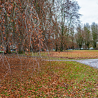 Buy canvas prints of Autumn colors, Maastricht by Chris Yaxley