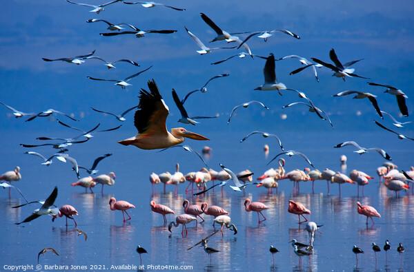 Flamingos Nakuru National Park Kenya Africa Canvas Print by Barbara Jones