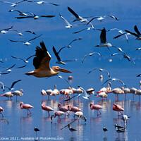 Buy canvas prints of Flamingos Nakuru National Park Kenya Africa by Barbara Jones