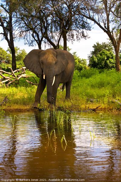 Lone Elephant Chobe River Botswana Africa Canvas Print by Barbara Jones