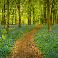 Buy canvas prints of A Walk in the Woods by Viv Thompson