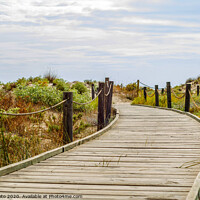 Buy canvas prints of wooden boardwalk in the dunes leading to the sandy beach, the path by the sea, plants on the dunes by Q77 photo