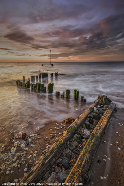 Heacham Groynes by evening light Canvas Print by Phillip Dove