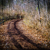 Buy canvas prints of The Woods Road by Nathan Bickel