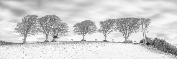 Snow at the Seven Sisters Trees, Holnicote, Exmoor Print by Shaun Davey