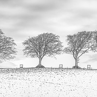 Buy canvas prints of Snow at the Seven Sisters Trees, Holnicote, Exmoor by Shaun Davey