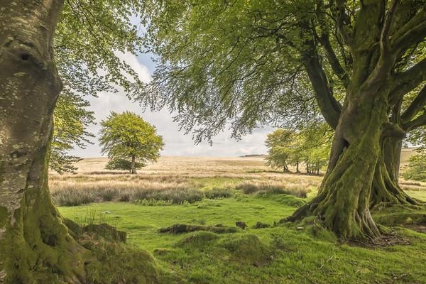 Tree-framed view from Larkbarrow, Exmoor Canvas Print by Shaun Davey