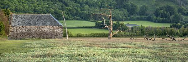 Disused barn and skeletal trees, Porlock Marsh Canvas Print by Shaun Davey