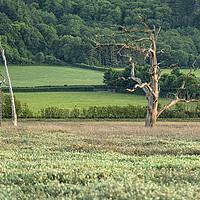 Buy canvas prints of Disused barn and skeletal trees, Porlock Marsh by Shaun Davey