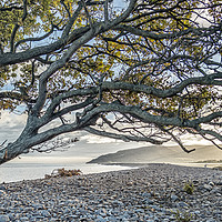 Buy canvas prints of Coastal tree with a view to Hurlstone Point by Shaun Davey