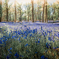Buy canvas prints of Bluebell Fantasia by Mark Jones