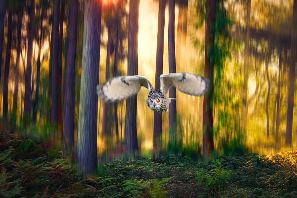 European Eagle Owl flying through trees Framed Mounted Print by Simon Marlow