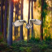 Buy canvas prints of European Eagle Owl flying through trees by Simon Marlow