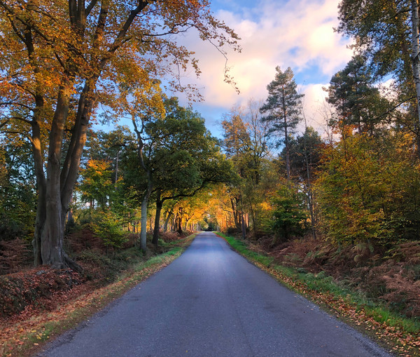 On a country road in the golden hour Canvas print by Simon Marlow