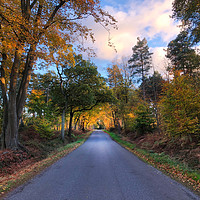 Buy canvas prints of On a country road in the golden hour by Simon Marlow