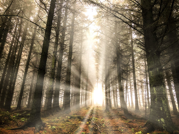 Rays of light in the forest Canvas Print by Simon Marlow