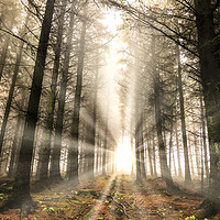 Buy canvas prints of Rays of light in the forest by Simon Marlow