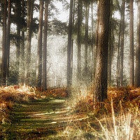 Buy canvas prints of Autumn in the forest by Simon Marlow
