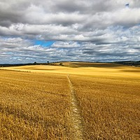 Buy canvas prints of Path through the fields, South Stoke, Oxfordshire by Simon Marlow