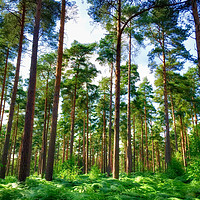 Buy canvas prints of Summer forest colours by Simon Marlow