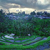 Buy canvas prints of  Tegallalang rice teracces In Bali, Indonesia by federico stevanin