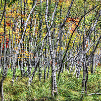 Buy canvas prints of Autumn colors with trees by Miro V