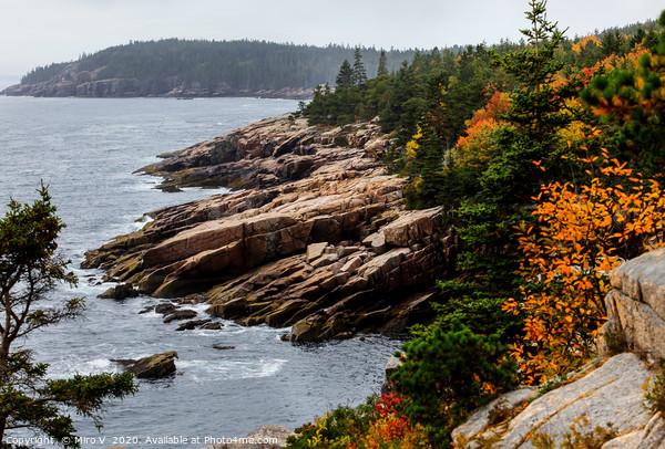 Rocky coastline with foliage colors Canvas Print by Miro V