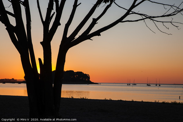Morning sunrise on the beach with tree Canvas Print by Miro V