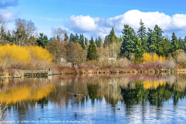 Larsen Lake Reflection Bellevue Washington Framed Mounted Print by William Perry
