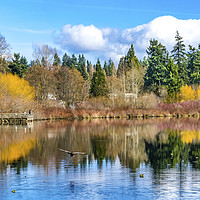 Buy canvas prints of Larsen Lake Reflection Bellevue Washington by William Perry