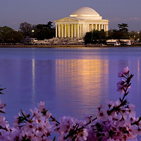 Buy canvas prints of Jefferson Memorial Cherries Washington DC by William Perry