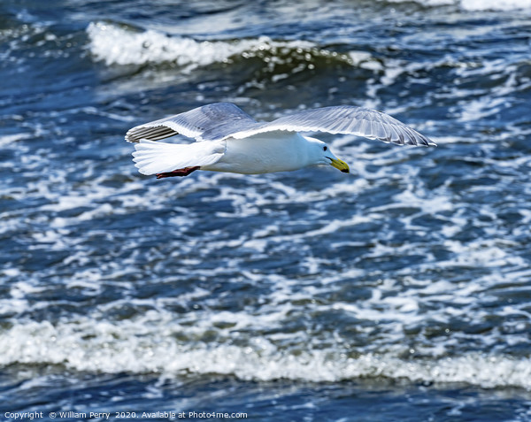 Seagull Flying Over Waves North Beach Park Edmonds Framed Mounted Print by William Perry