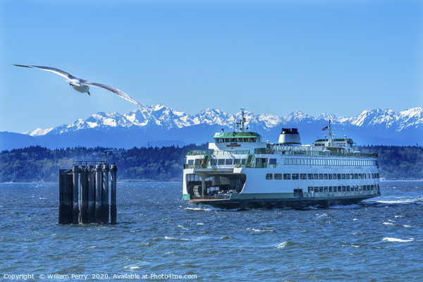 Seagull Washington State Ferry Olympic Mountains E Framed Mounted Print by William Perry