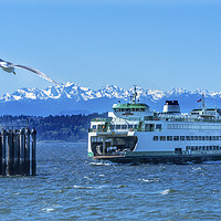 Buy canvas prints of Seagull Washington State Ferry Olympic Mountains E by William Perry