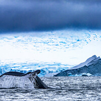 Buy canvas prints of Humpback Whale Tail Water Charlotte Harbor Antarctica by William Perry