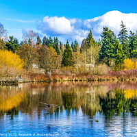 Buy canvas prints of Larsen Lake Reflection Duck Blueberry Farm Park Bellevue Washington by William Perry