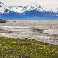 Buy canvas prints of Snow Mountains Yellow Flowers Ocean Seward Highway Anchorage Ala by William Perry
