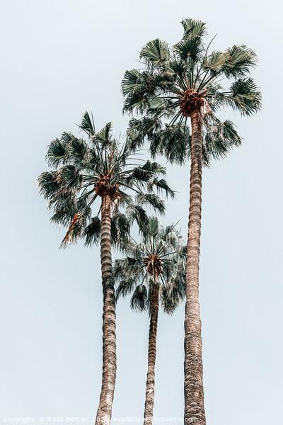 Palm Trees, Miami Summer Vibes, Minimalist Art Acrylic by Radu Bercan