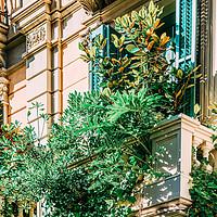 Buy canvas prints of Barcelona City, Green Vegetation Balcony by Radu Bercan