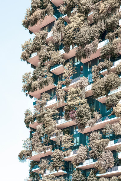 Bosco Verticale Tower In Milan, Urban Nature Italy Framed Mounted Print by Radu Bercan