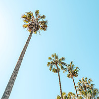 Buy canvas prints of Tropical Palm Trees, Palm Tree Leaf, Summer Vibes by Radu Bercan