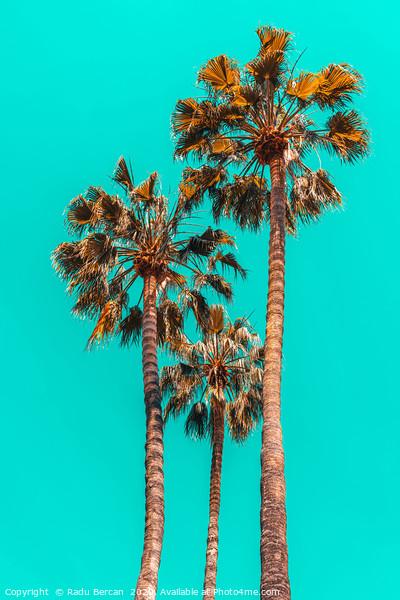 Palm Spring Trees, Summer Vibes, California Beach Framed Print by Radu Bercan