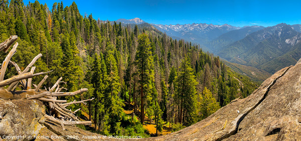 Sequoia National Park Framed Mounted Print by Nicolas Boivin