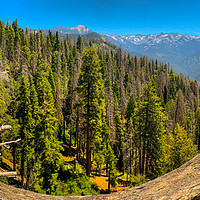 Buy canvas prints of Sequoia National Park by Nicolas Boivin