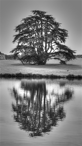 Reflections Tree Canvas print by David French