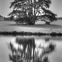 Buy canvas prints of Reflections Tree by David French