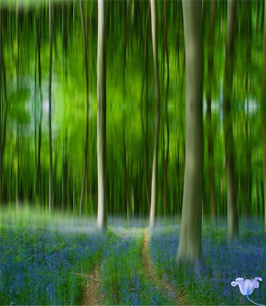 Blue Bell Art Digital art Canvas print by David French
