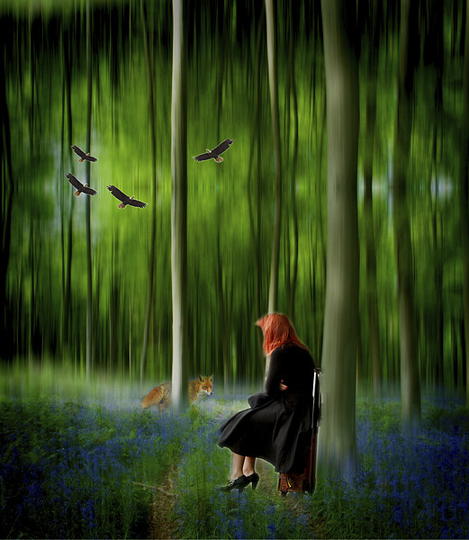 Red riding hood in Blue Bell wood   Digital art Canvas print by David French