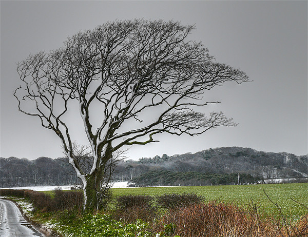 Winter Snow north Norfolk Canvas print by David French