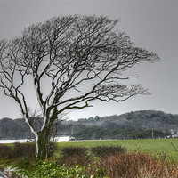 Buy canvas prints of Winter Snow north Norfolk by David French